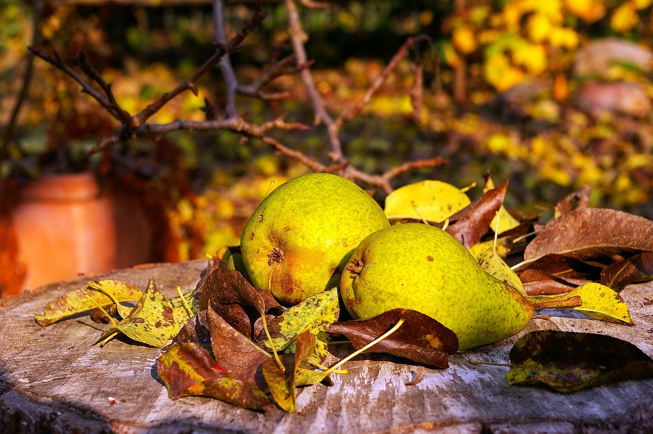 A close up of a fruit tree